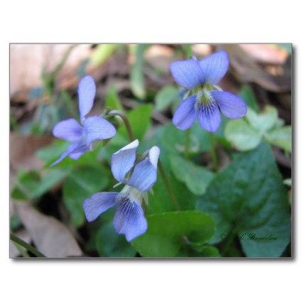 Lovely violets symbolize modesty and devotion.