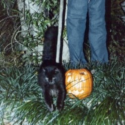 Halloween - Why Cats, Bats and Spiders?