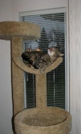 Cat Tree Condos