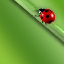 The Magnificent Ladybug & Her Astounding Contribution