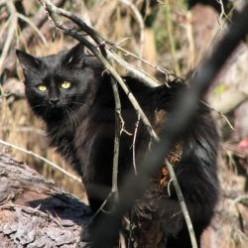Star Noir, Our Beautiful Black Cat