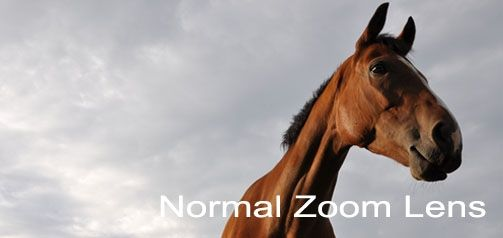 normal zoom lens