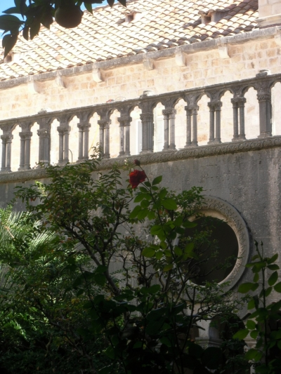 A rose in the garden of the Franciscan monastery.