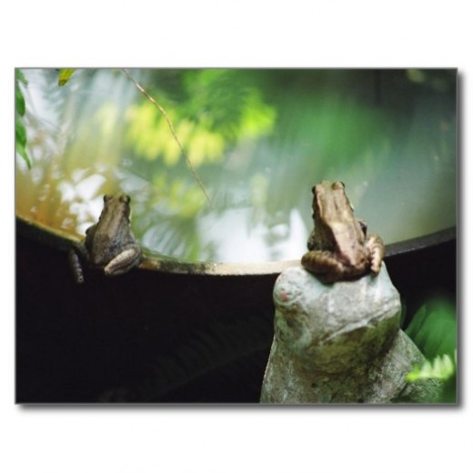 A pair of frogs breeds in the water feature each year.