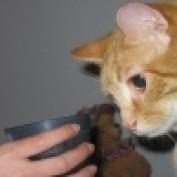 catbehaviors profile image