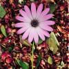 SalviaDivinorumLo profile image