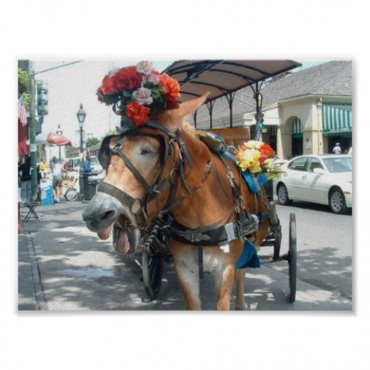 New York may have its horse drawn carriages, but we have mules. Hee-haw!