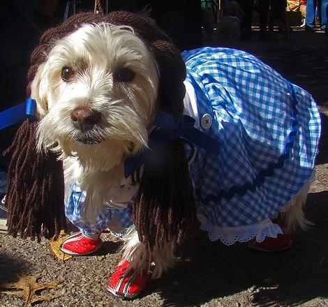 Dorothy Dog