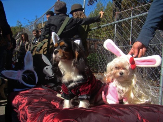 Hugh Hefner and Playdog Bunny