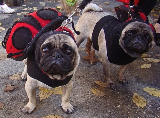 Ladypugs dogs