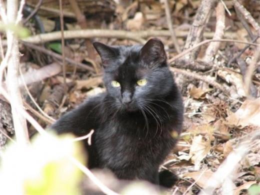 Pepper, the neighbors barn cat