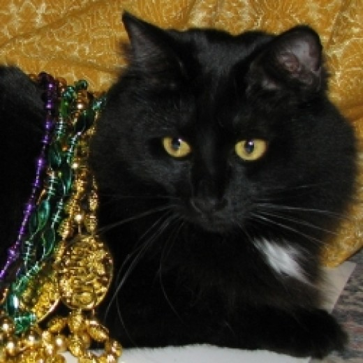 "Star Noir decked out for Mardi Gras. She says, ""Need More Beads!"""