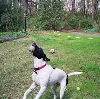Score! Did you see that catch? Woof, Woof!