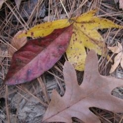 Quiz: Fall Nature