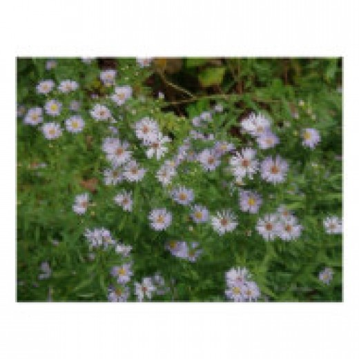 Fall blooming native plant
