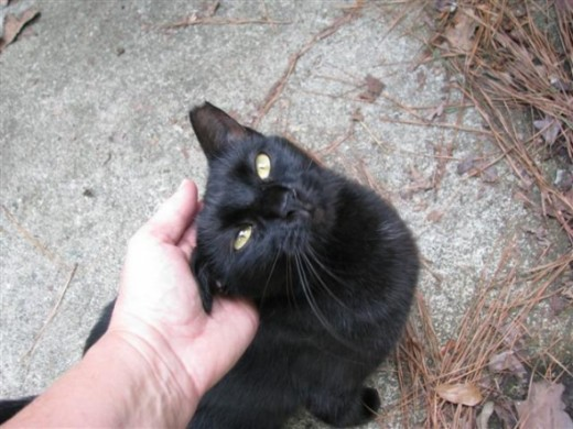 Pepper Enjoys Petting
