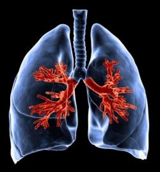 Asbestos primarily affects the lungs