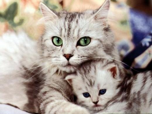 Mom and baby kitten
