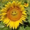 jen17 lm profile image