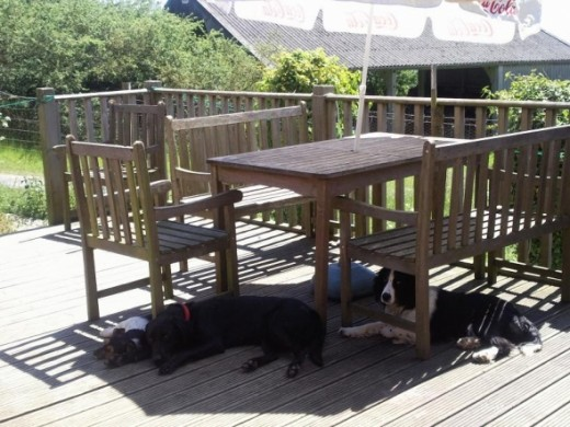 Me and some doggy chums resting in the shade after a day playing in the sunshine.