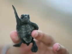 How To Look After Terrapins & Turtles