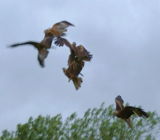 Red Kite Fest by Clive Anderson July 2012
