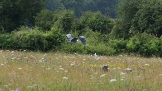 Even the locals joined in, as you can see this local Heron makes off with one of the food parcels left out for it.