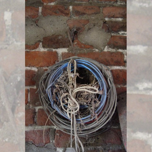 A Wren's nest in an odd place
