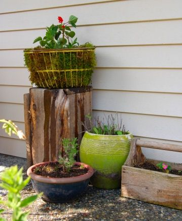 The finished moss basket displayed and ready to grow with the weather!
