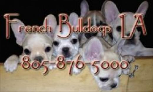 French Bulldogs LA 805-876-5000