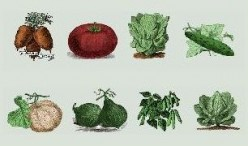 Heirloom Seeds:  The Importance of Planting and Preserving Genetically True Seeds For The Future