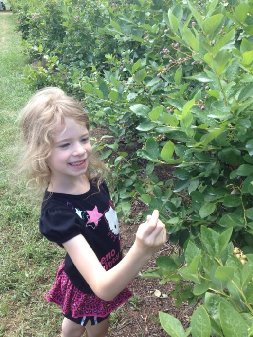 My daughter loved picking blueberries with me, although I think she may have eaten as much as she put in the bucket to take home!