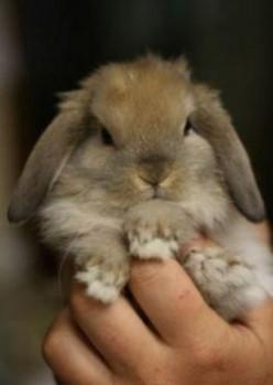 Rabbit life span