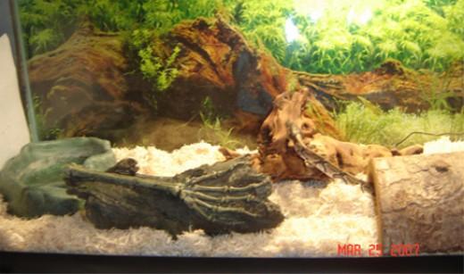 Simple Snake Enclosure. 29 Gallon Tank.