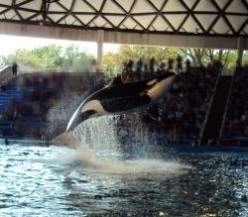 Kids with Special Needs have a great time at Sea World!
