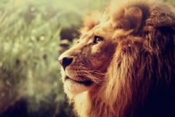 Lion:  A Poem