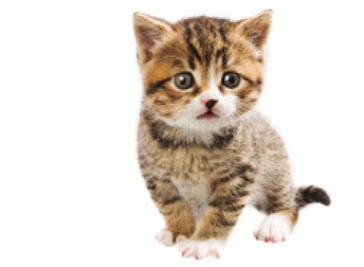 Sweet Kitten Free MS Clip Art
