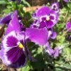 tutor1235 lm profile image