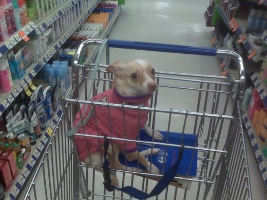 Supermarket shopping!!!! Don't I look cute in my sweater? ;)