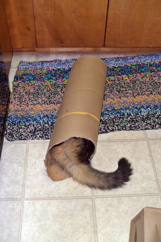 Cat in a tube!