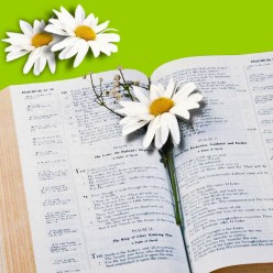 Inspirational Bible Verses Are A Blessing To Women
