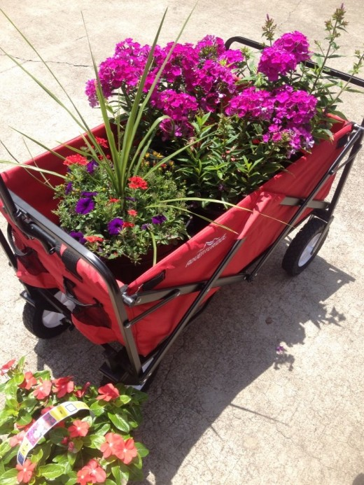 My wagon sure comes in handy when I want to move anything in the yard.  This day I had purchased some plants and needed to take them to different places in the yard.  I love my little red wagon.