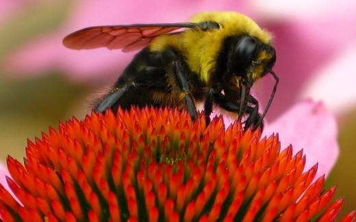 yellowblackbumblebee