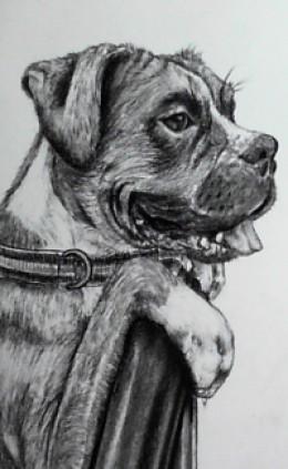 how to draw a realistic labrador