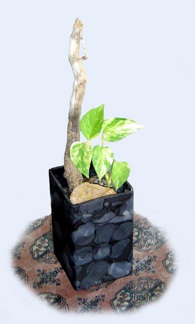 Bring Nature to Indoor Decorating
