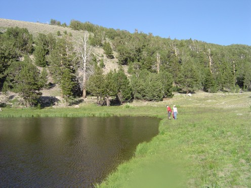 Mountain lake full of frog spawn at 9000 ft