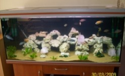 Setting Up A Cichlid Fish Tank
