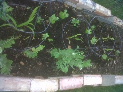 Another updated photo of raised bed garden