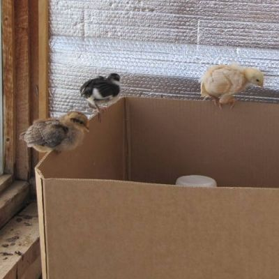 A Little Bigger and Perching on the Box