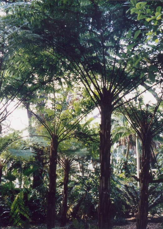 The Palm Grove at Marie Selby Botanical Gardens